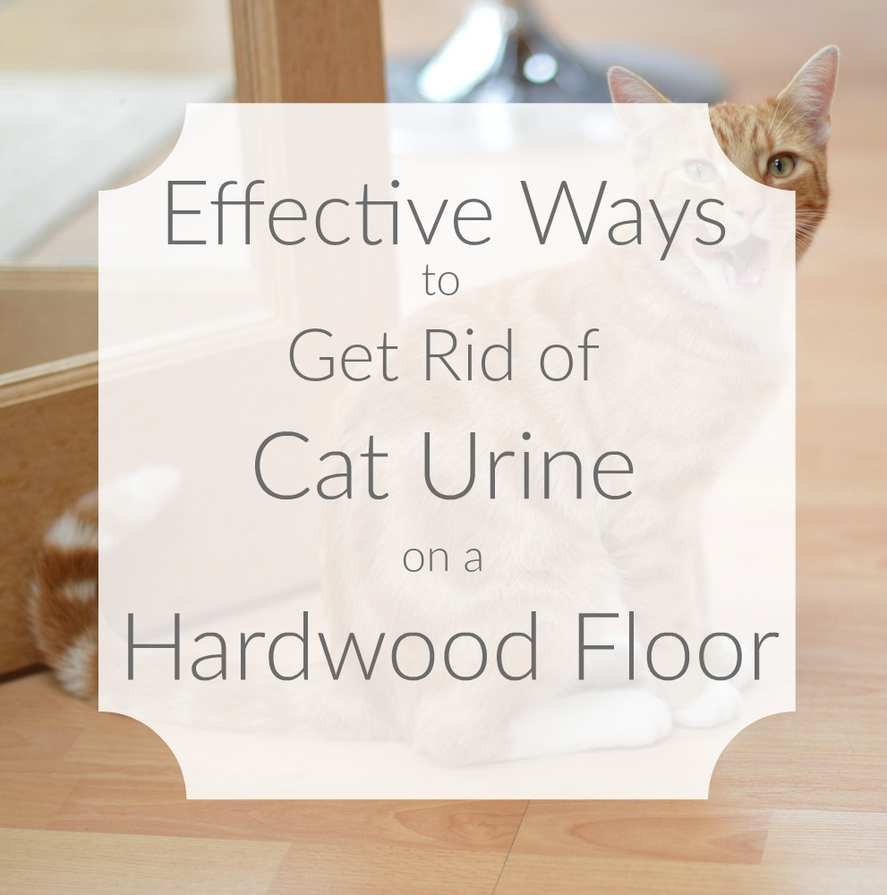 Sealing Wood Floors Cat Urine