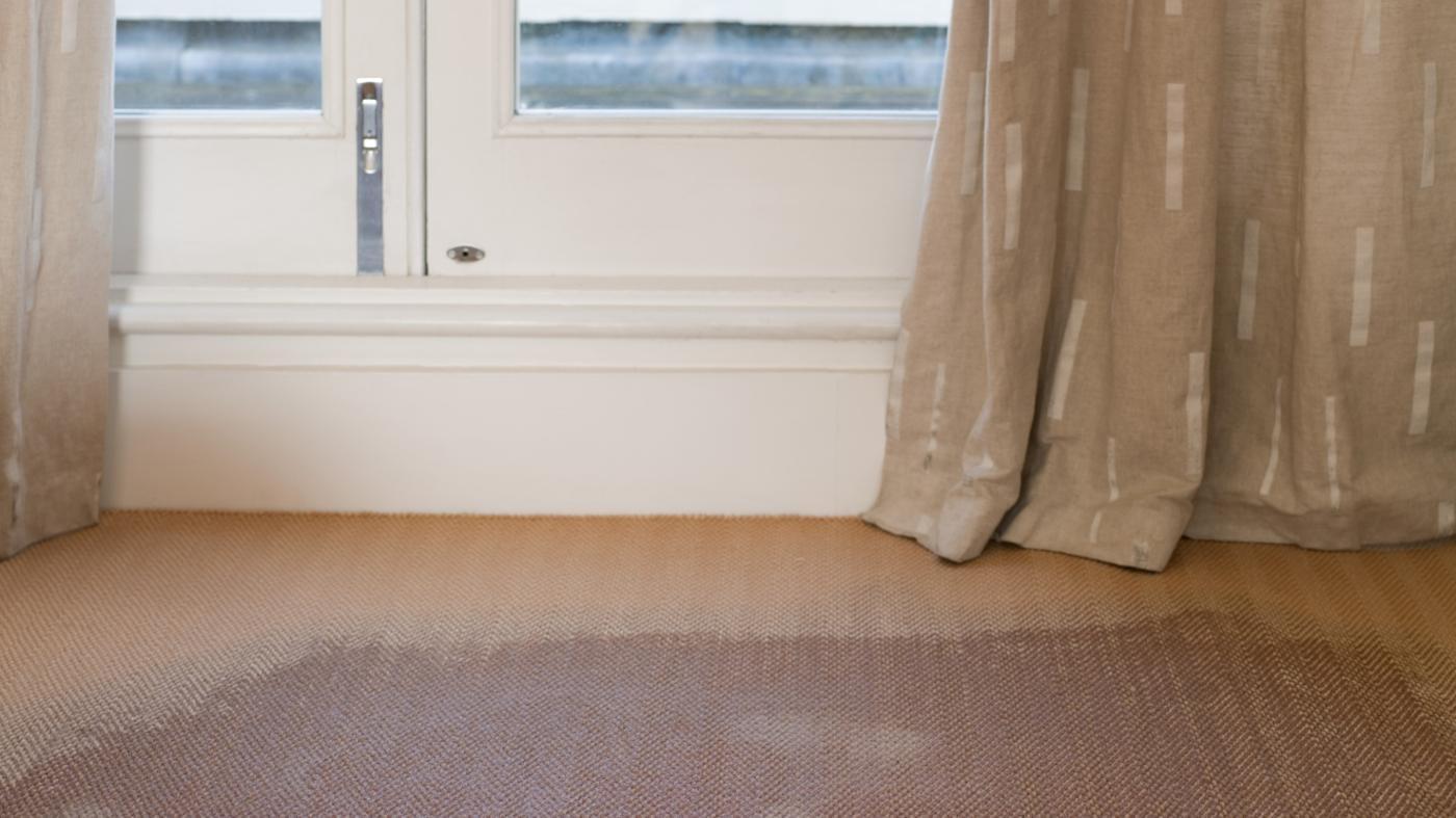 Basement Carpet Smells Musty