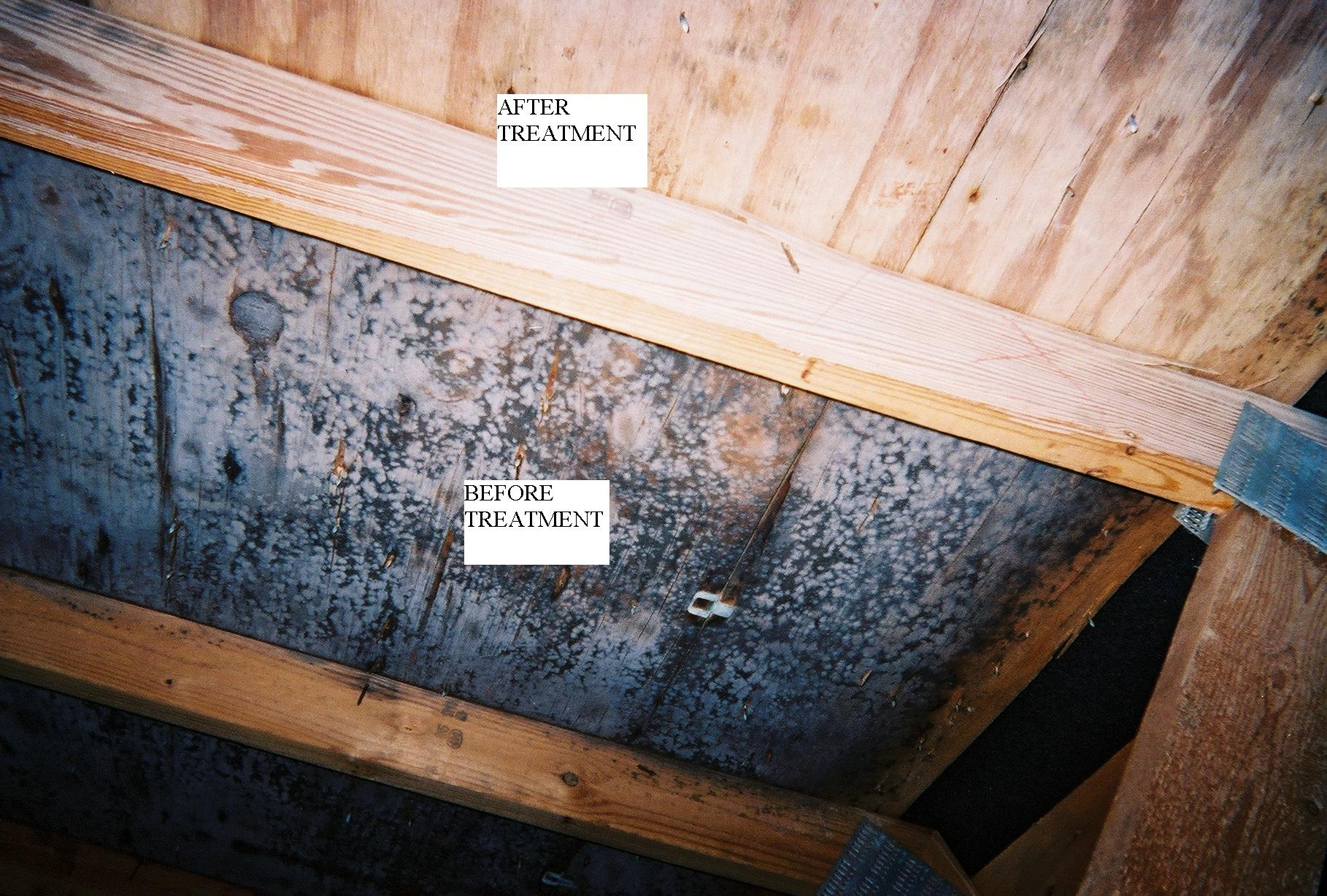 Basement Wood Paneling Mold