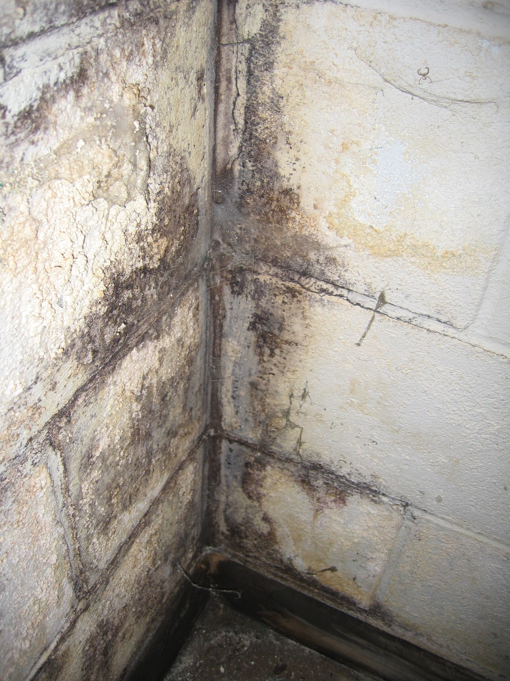 Black Mold Concrete Basement Walls