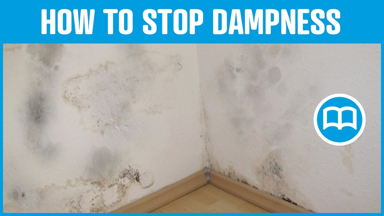 Damp Basement Smell Cure