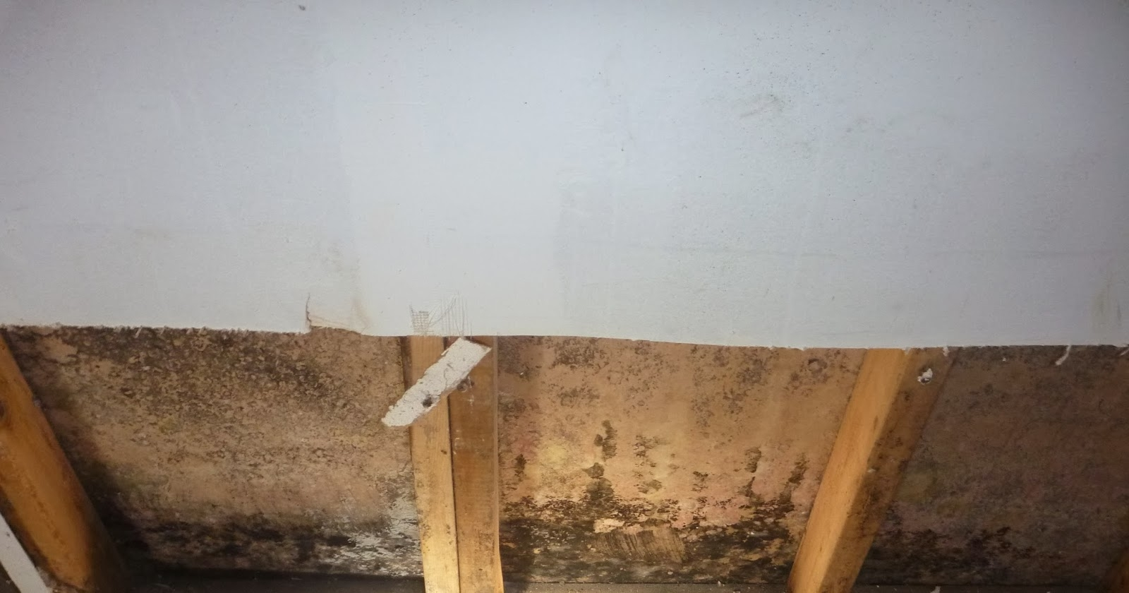 Dirt Floor Basement Smells