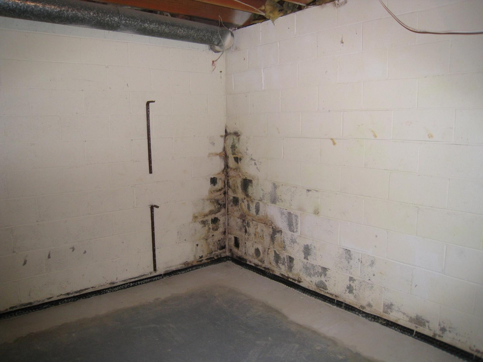 Kill Black Mold Basement Wallsmold in basement