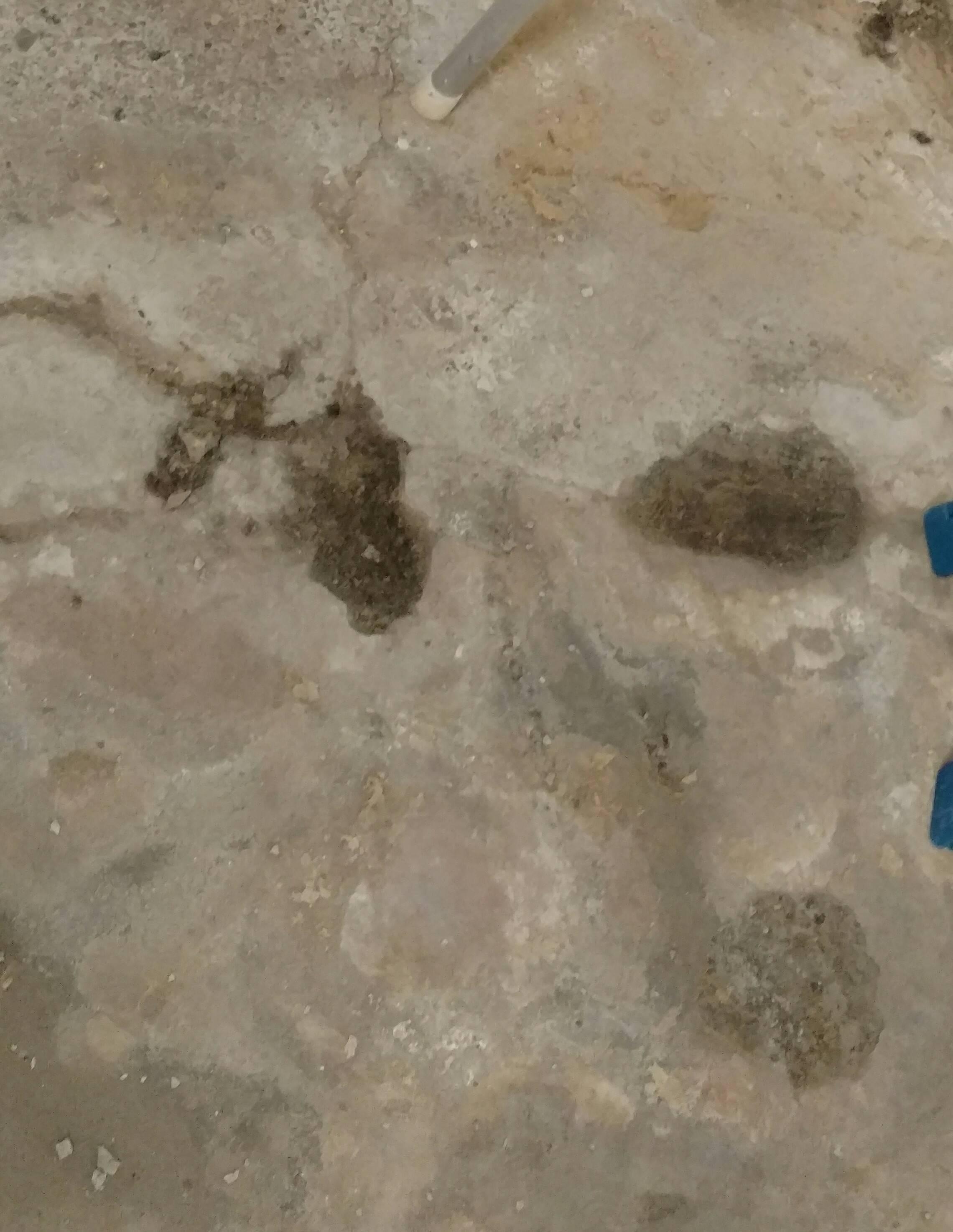 Seal Damp Concrete Basement Floor