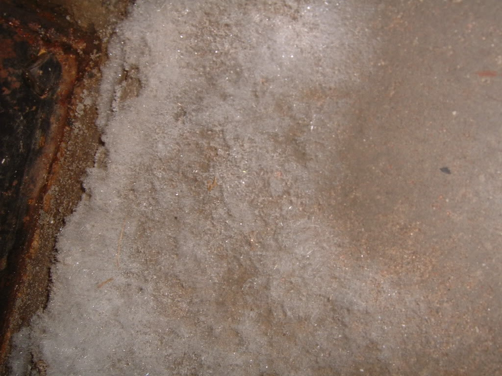 White Mold On Basement Cement Walls