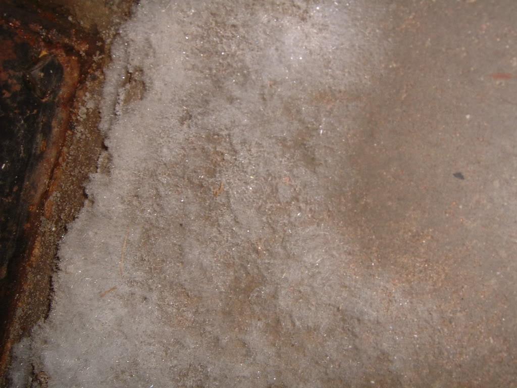 White Mold On Walls Basement