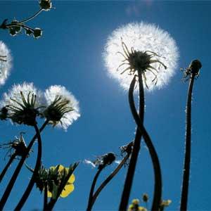 weeds-00