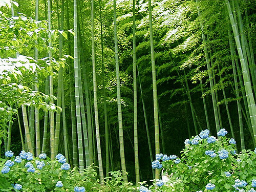 bamboo-forest-3