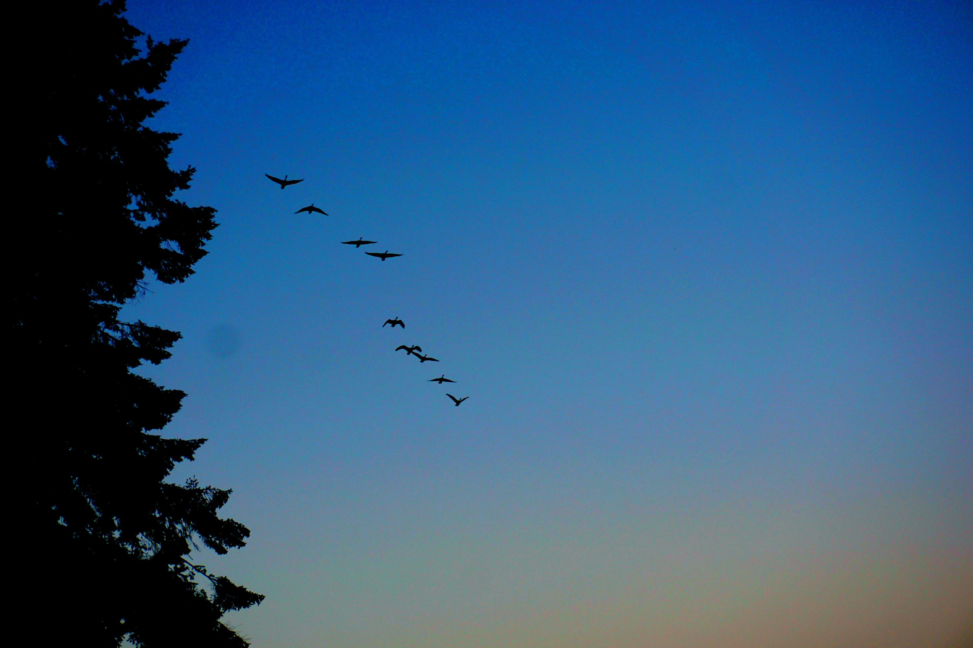 eld-inlet-birds-overhead