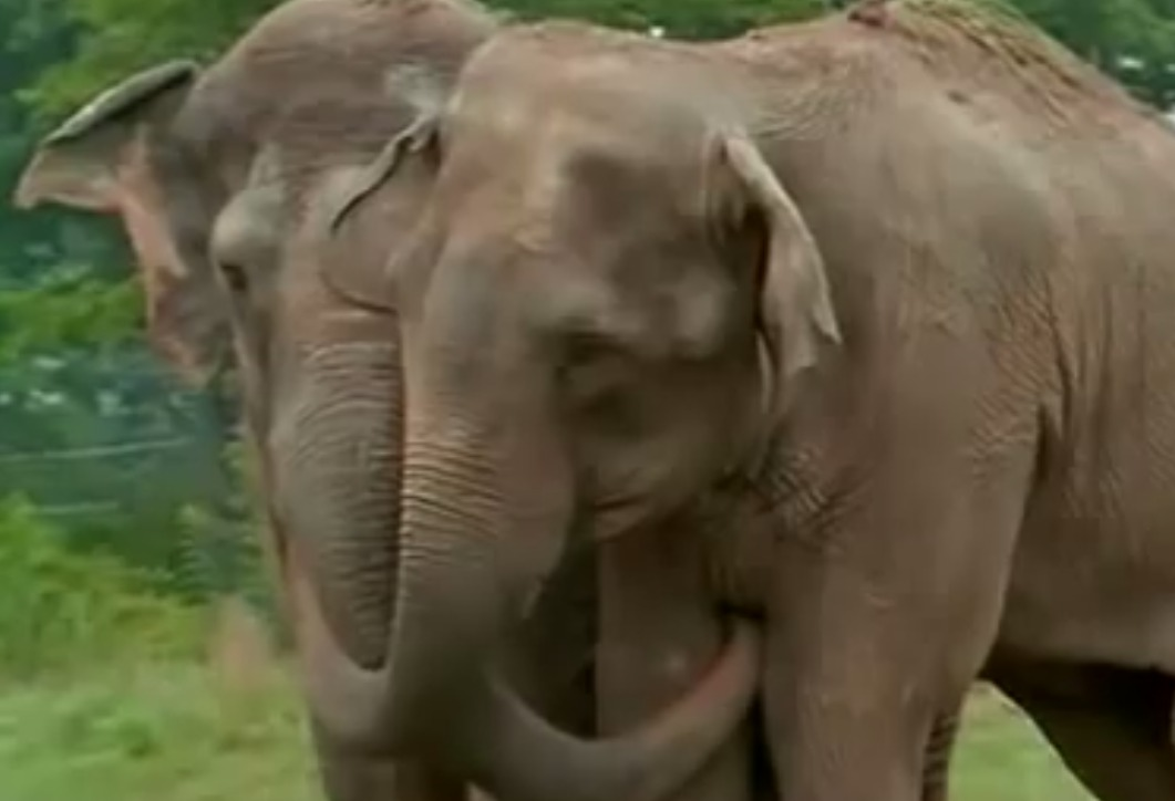 Elephant Hug.jpg