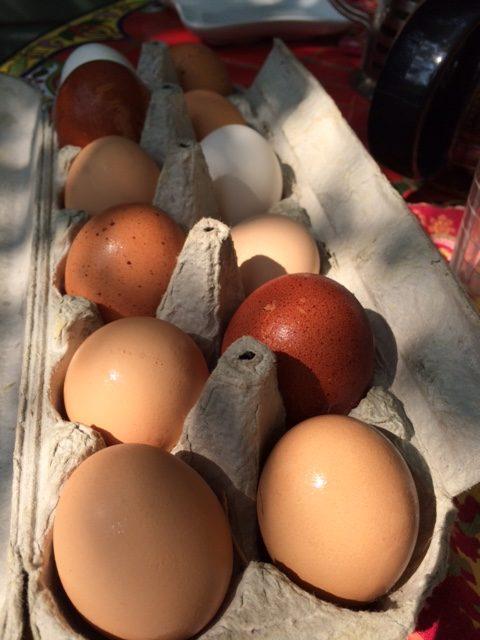 Eggs-park-lane-guest-house