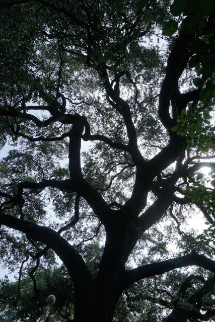 Park-lane-tree-shadow