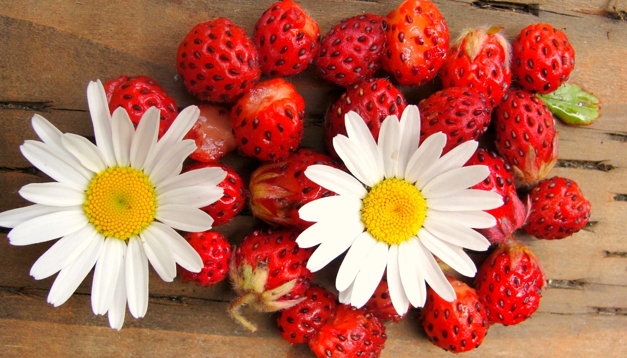 Strawberries and Daisies Edit.jpg