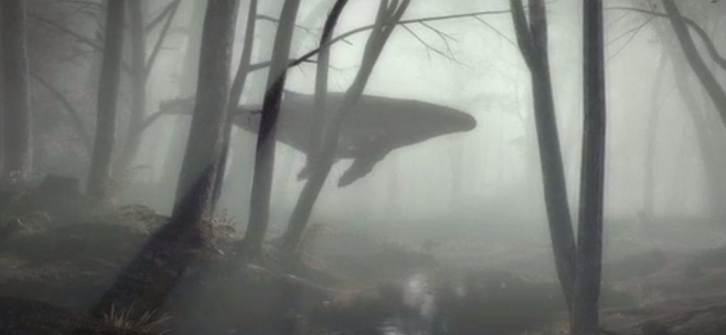 WhaleinForest Video