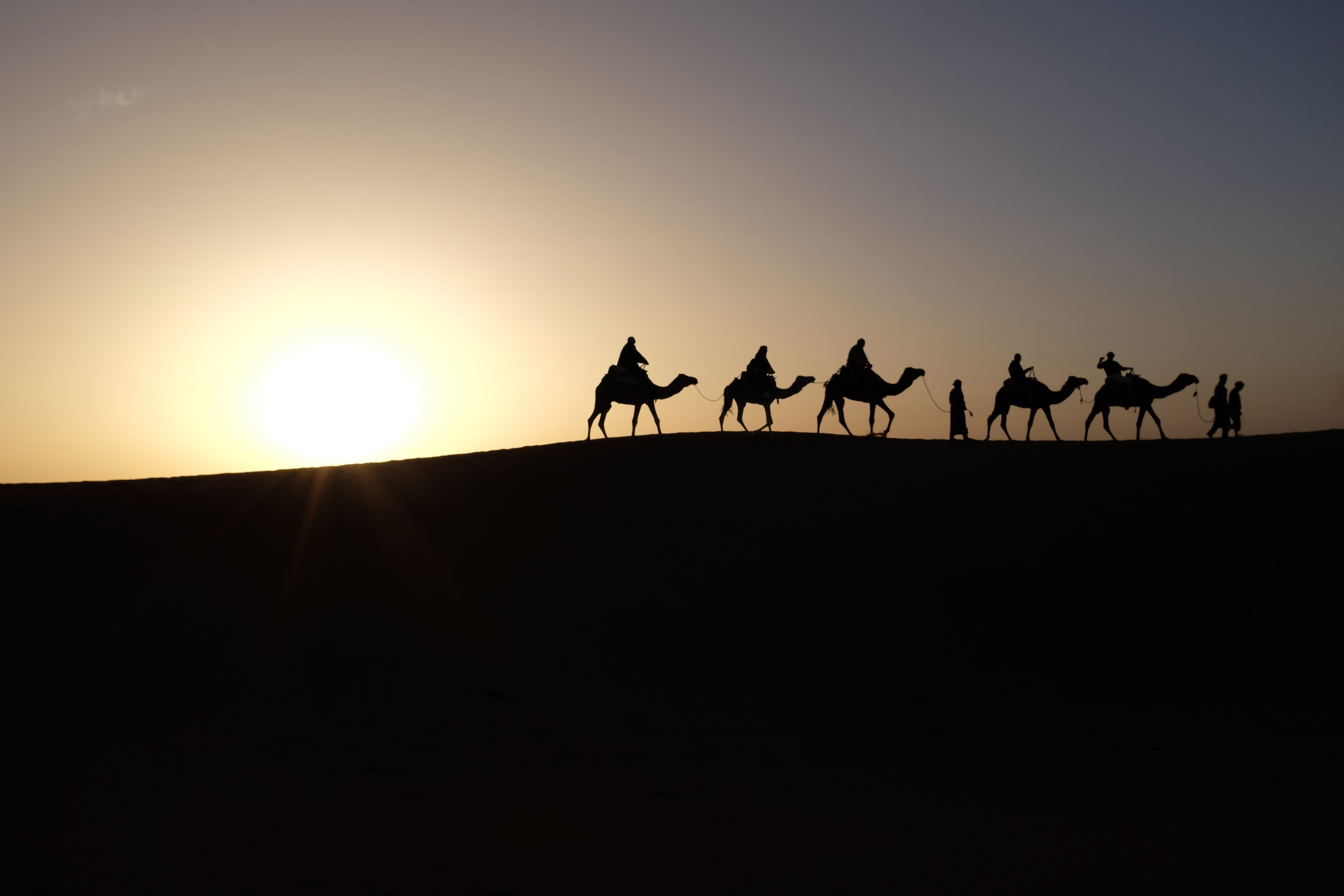 camels-in-silhouette