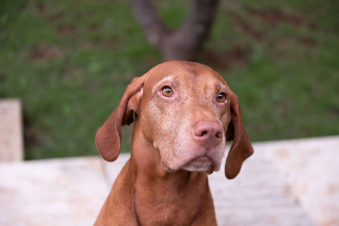 ensaio lifestyle de família com cachorro pet cão na casa dos clientes por fotógrafa laura alzueta fotografia de familia em são paulo