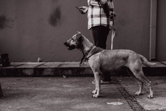 fotografo de casamento araraquara fernando belletti the dream studio