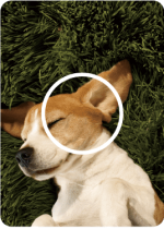 02-instax-cachorro-1
