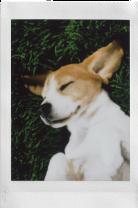 02-instax-cachorro-2