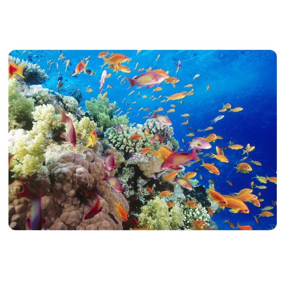 Permalink to Tropical Fish Bathroom Rugs