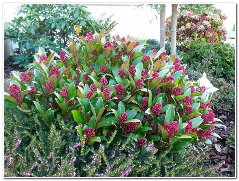 Élégant Jardin Des Fleurs