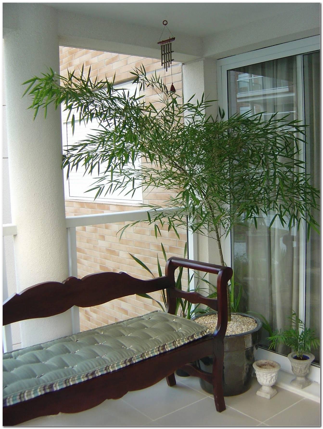 Bambu Mossô 60 Ideias De Ambientes Internos E Externos Com A Planta