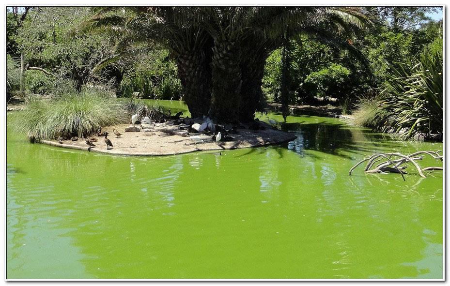 Bassin De Jardin Quelle Taille