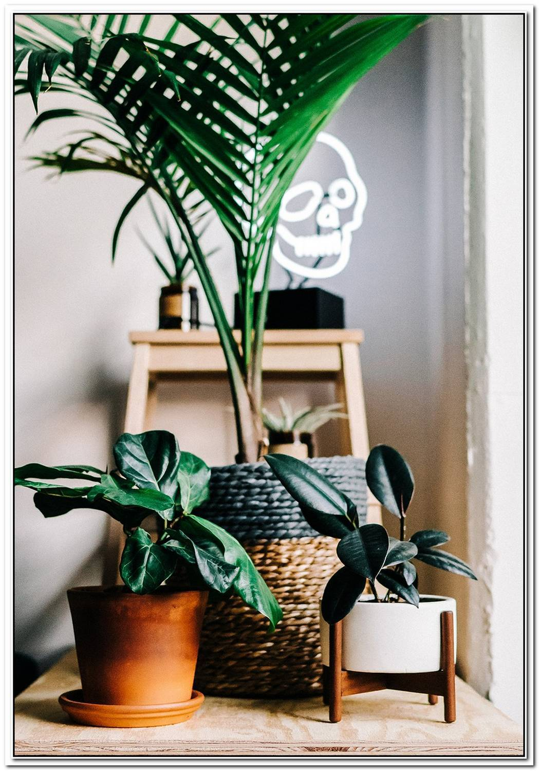Benefits Of Adding Plants And Greenery To Your Space