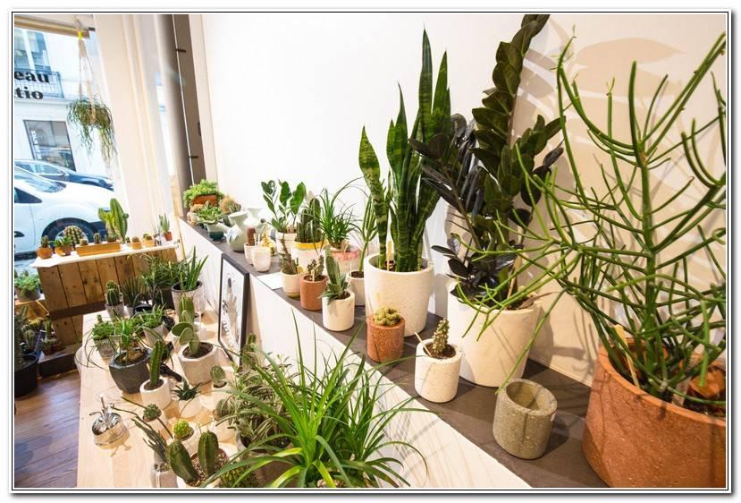 Best Plante Pour Bureau