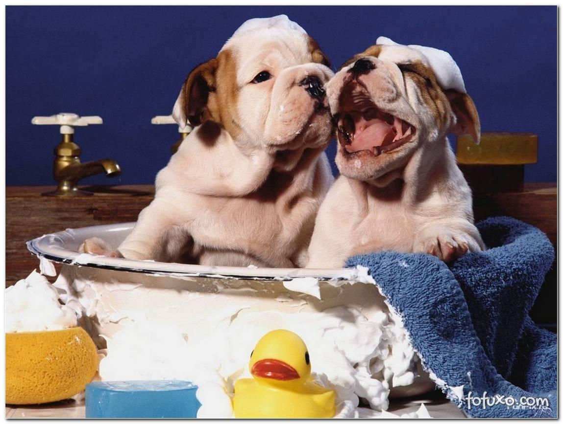 Como Dar Banho Em Cachorro Dicas Para Fazer Tudo Em Casa