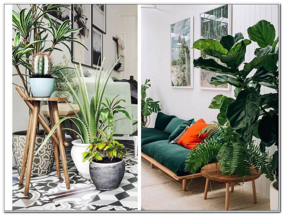 Deco Interieur Plante Verte
