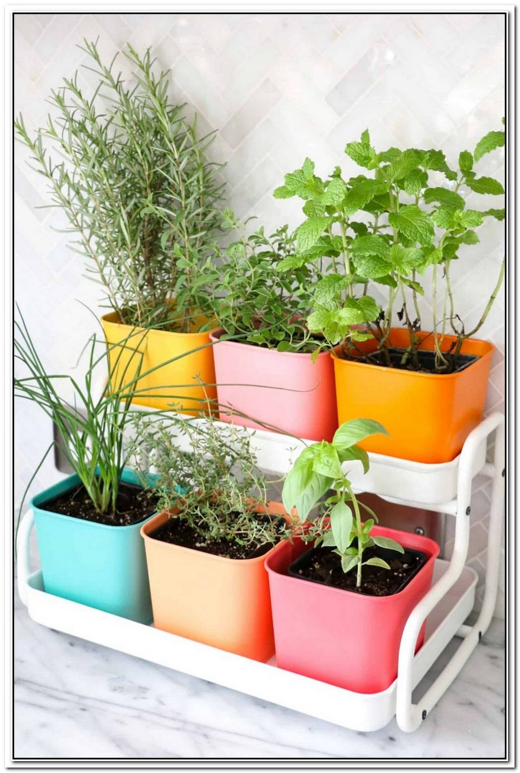 Elegant Kitchen Herb Planter Pots By Toyo