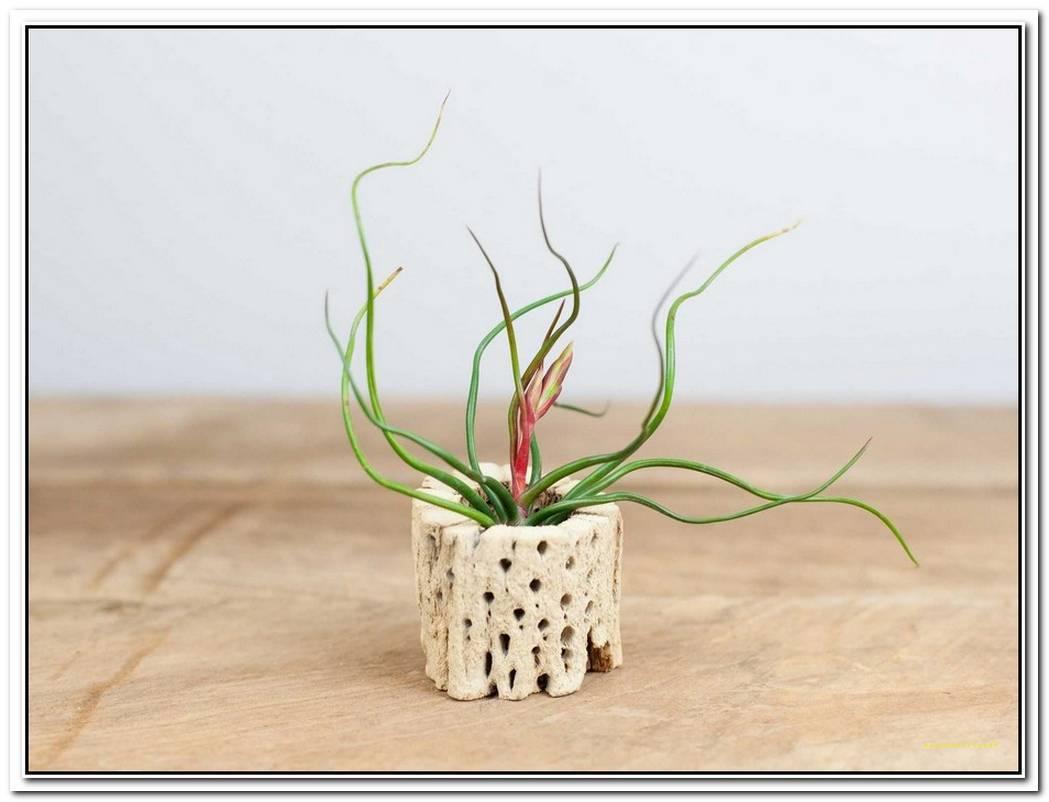 Elegant Plant Pods