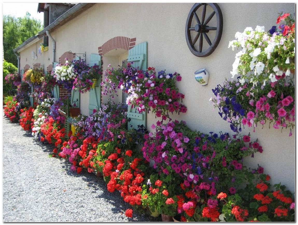 Flores Para Jardim 9 Espécies Para Área Externa