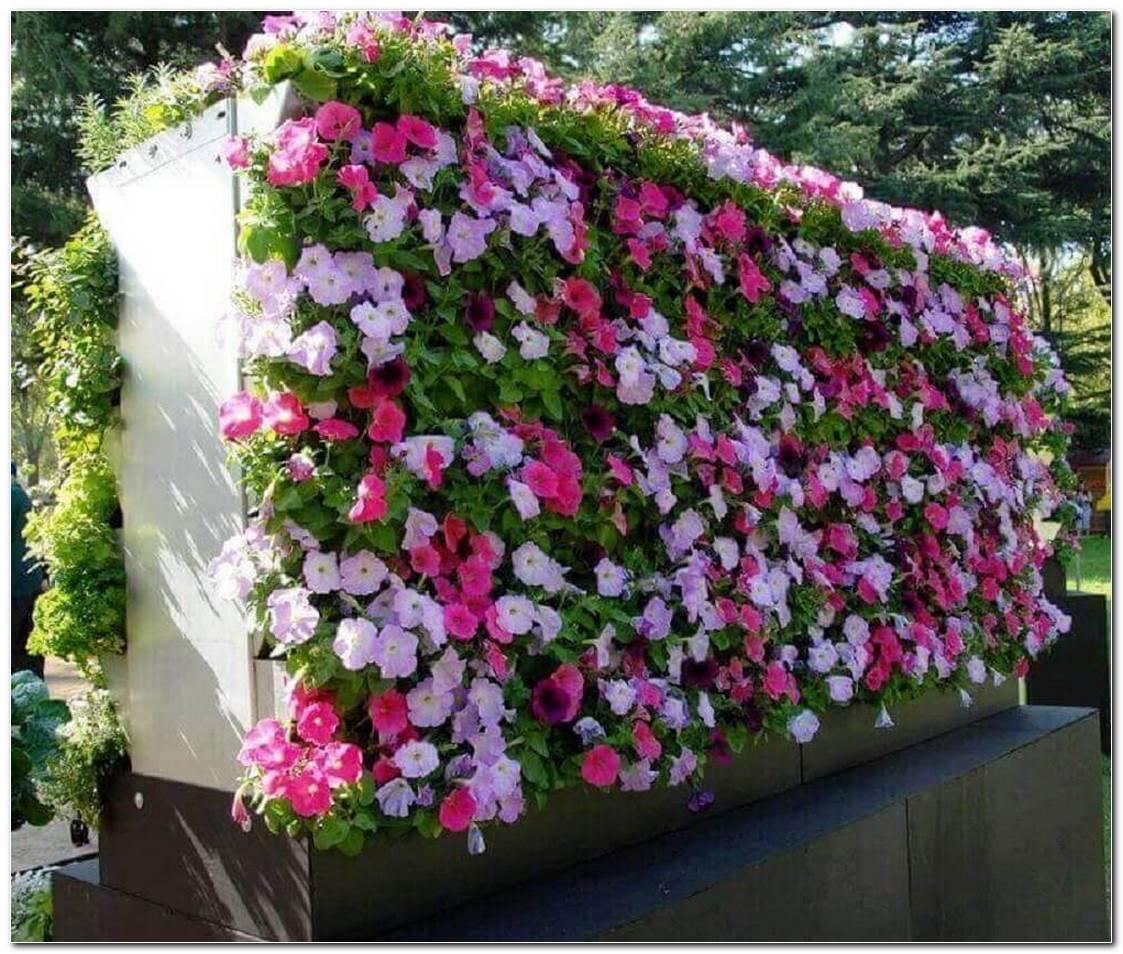 Flores Resistentes Para Jardim