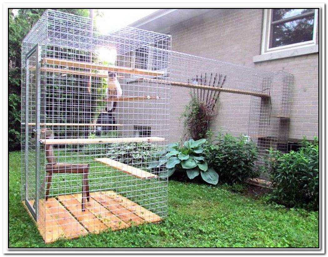 Give Your Feline Friend Safe Access To The Outdoors With A Catio