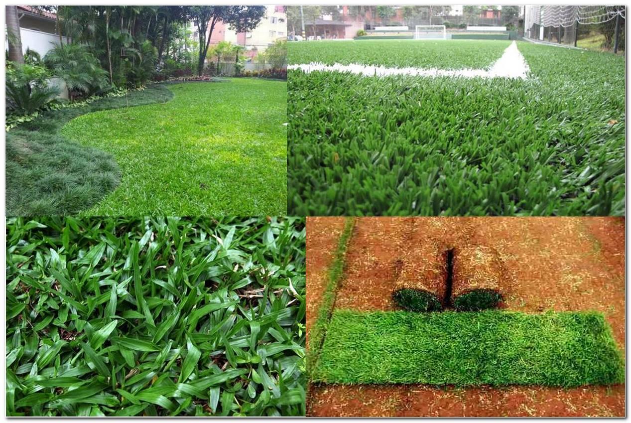 Grama São Carlos Características Usos E 21 Fotos De Jardins