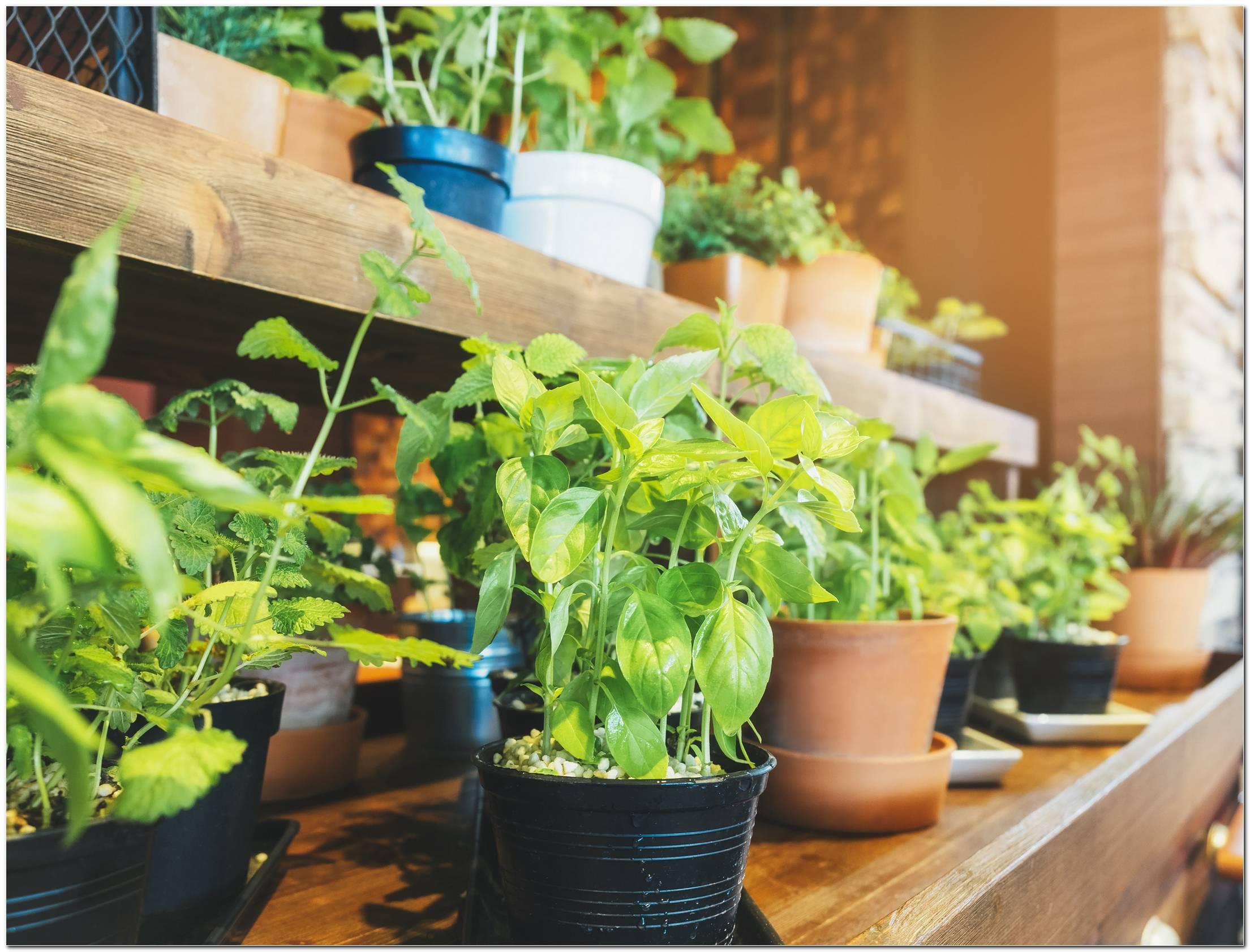 Horta Em Casa Aprenda Tudo Para Cultivar Alimentos Saudáveis Em Casa