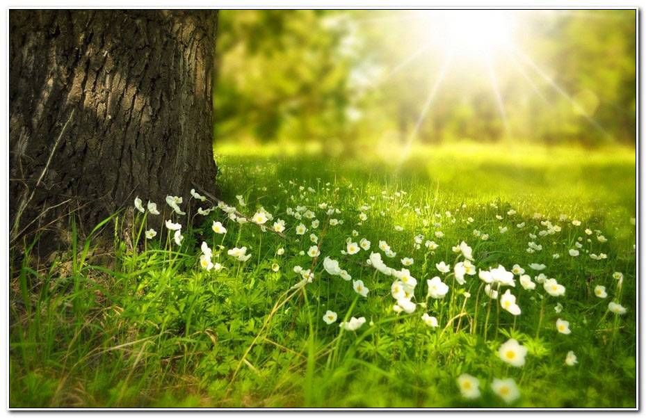 Images Nature Zen