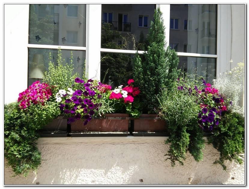 Into BalkonkäSten Bepflanzen Ideen