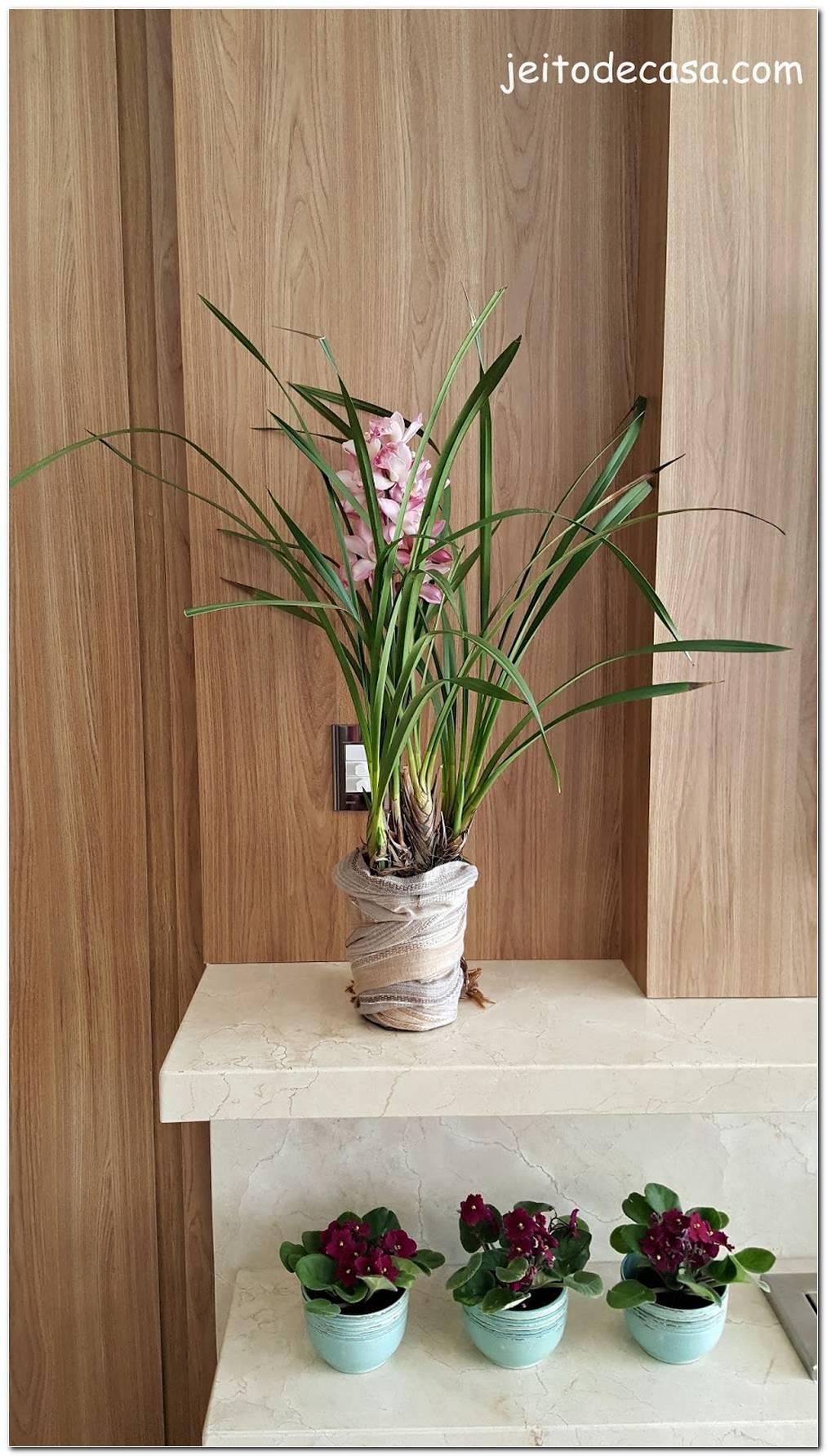 Invista Em Plantas Na Decoração