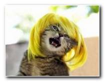 Lustige Frisuren Bilder