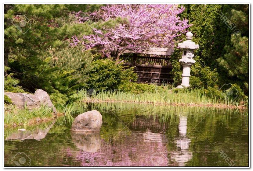 Luxe Jardin Japonais Cerisier Wallpaper