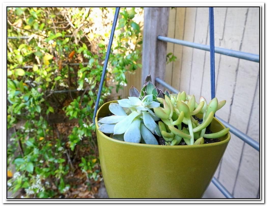 Make Your Own Modern DIY Hanging Planter
