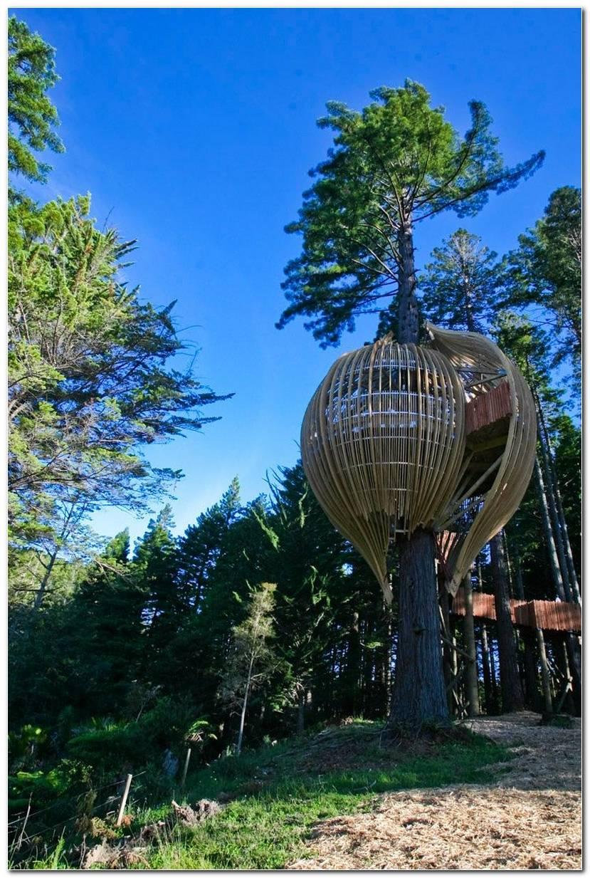 Modelos De Casas Na Árvore Modernas