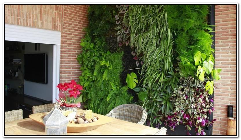 Nuevo Jardines Verticales Alicante Fotos De Jardín Decoración