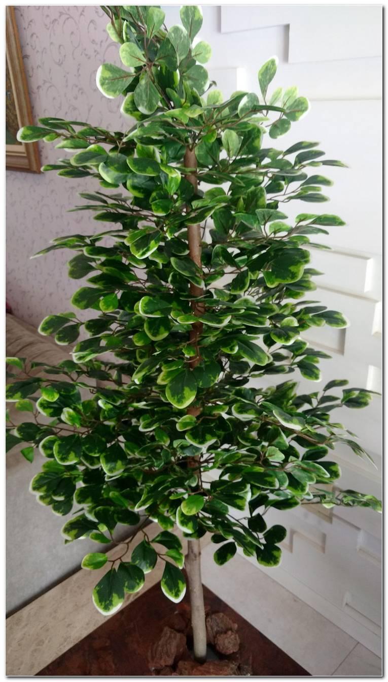 Planta Para Sala Artificial
