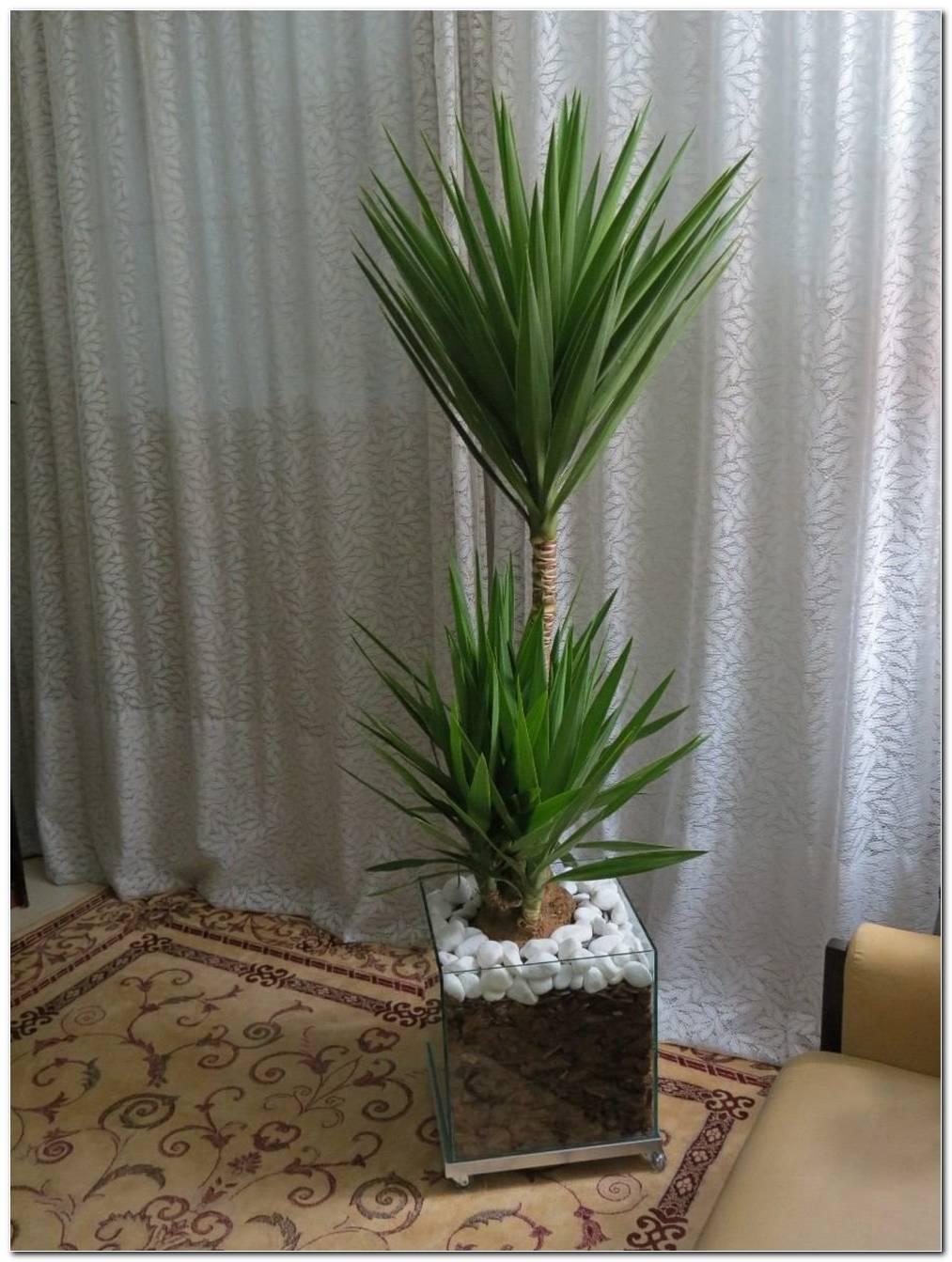 Plantas Artificiais Para Sala De Jantar