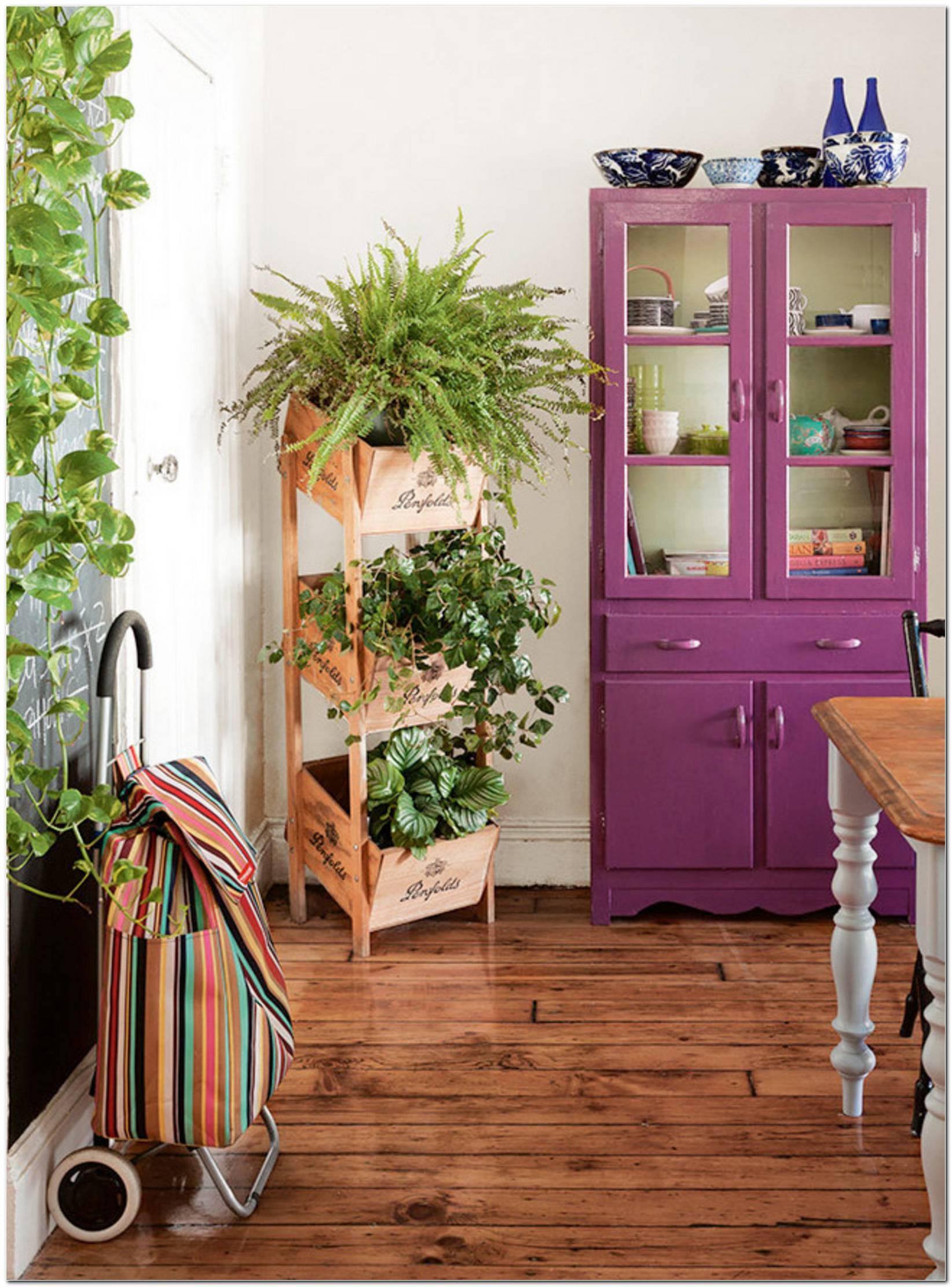 Plantas Ideias Para Interiores