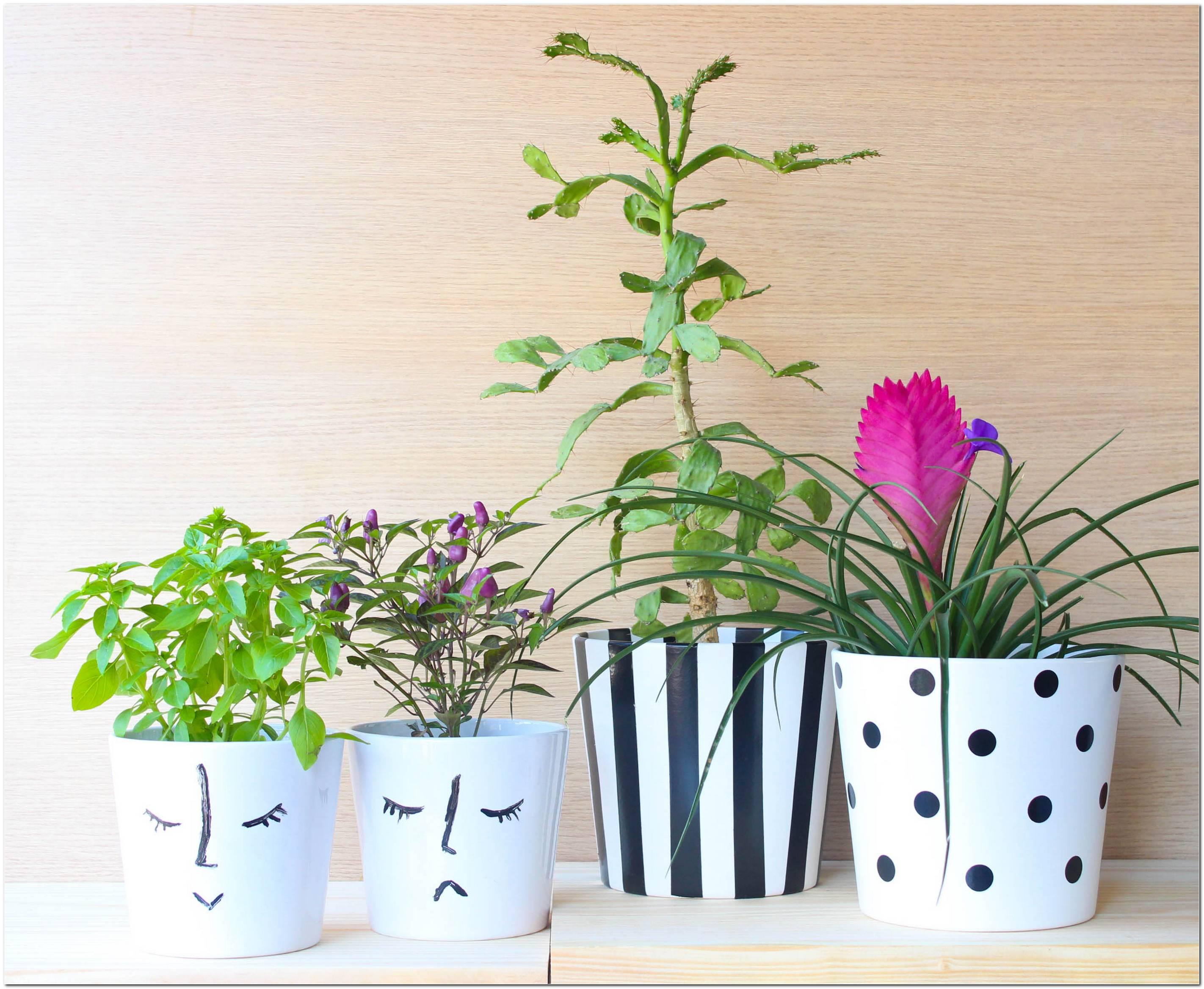 Plantas Ideias Para Vasos